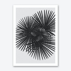 Fan Palm Black & White Art Print