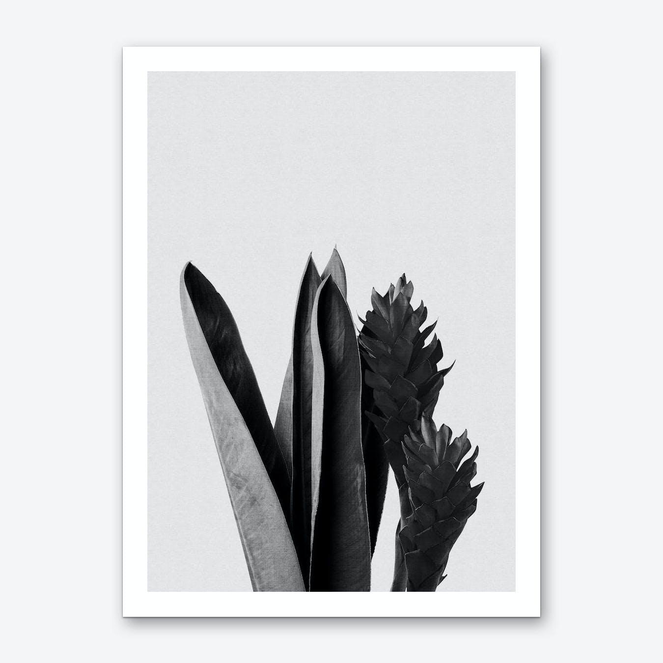 Flower Black & White Art Print