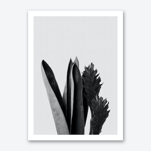 Flower Black & White Art Print