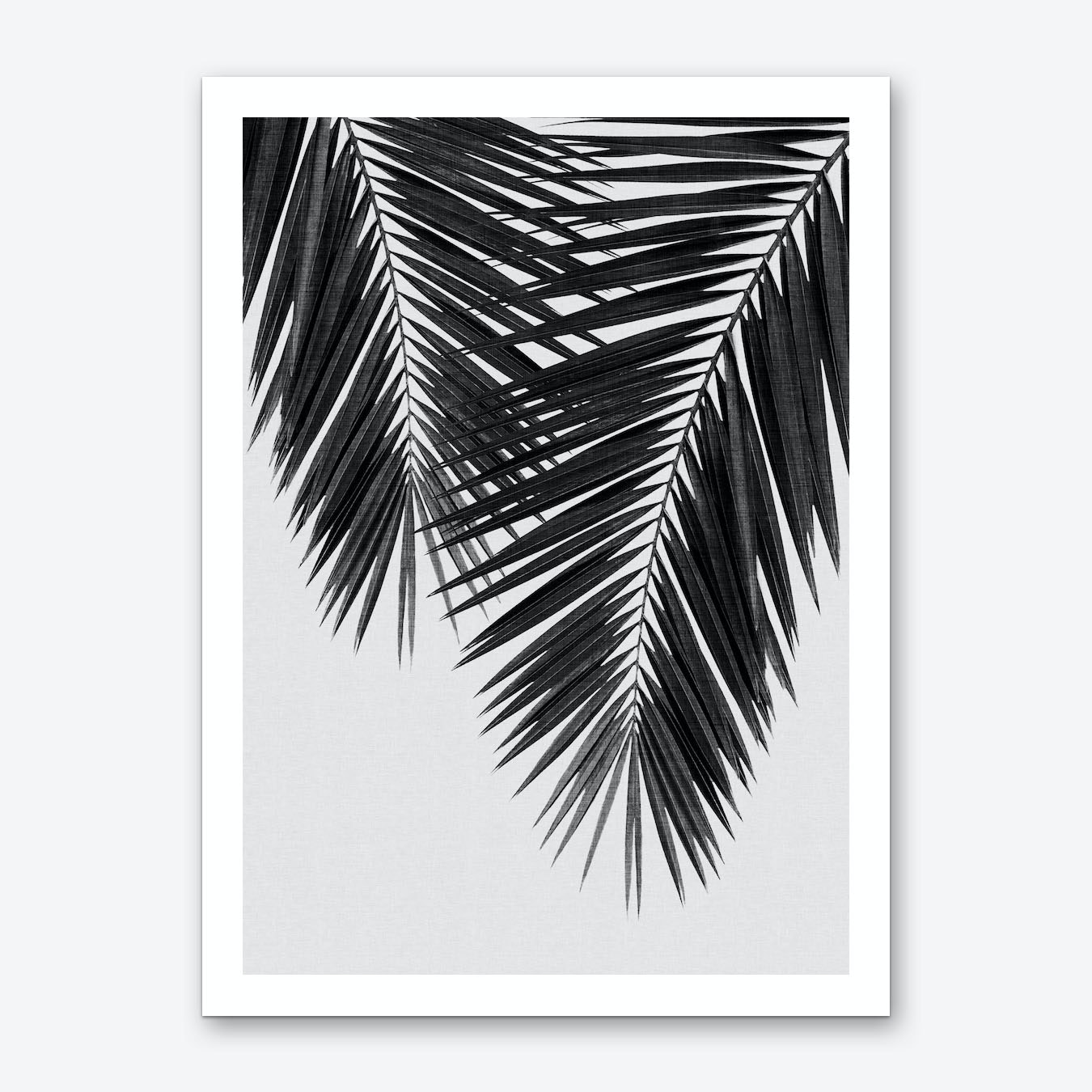 Palm leaf black white ii art print by orara studio