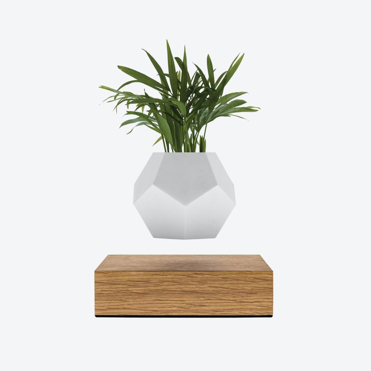 Lyfe - Planter