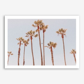 Palm Trees II Art Print