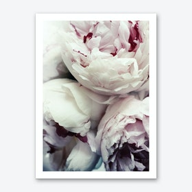 Peonies Art Print I