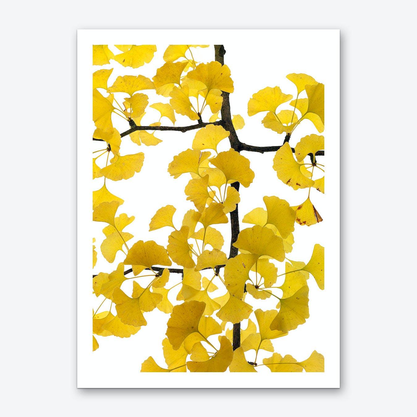 Ginko Art Print