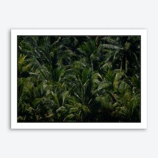 Palms1 Art Print