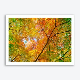 Autumn1 Art Print