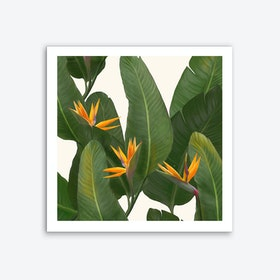 Tropical Flora Art Print