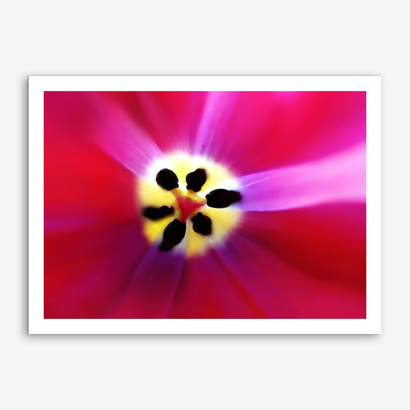 Tulip Intimacy Art Print