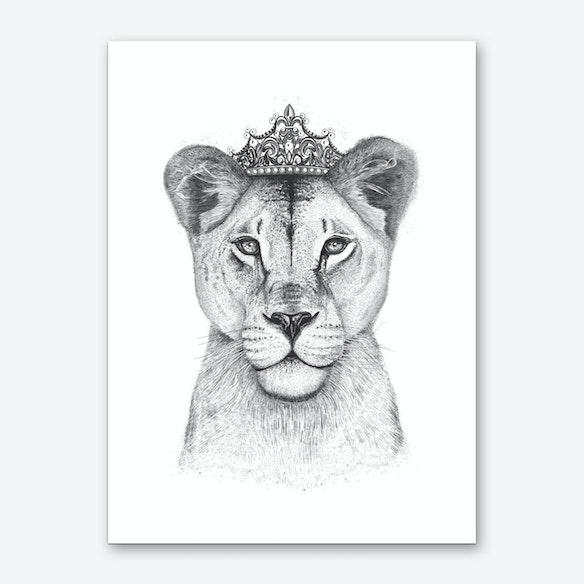 City Motors Jacksonville Ar >> Lioness Images Black And White - impremedia.net