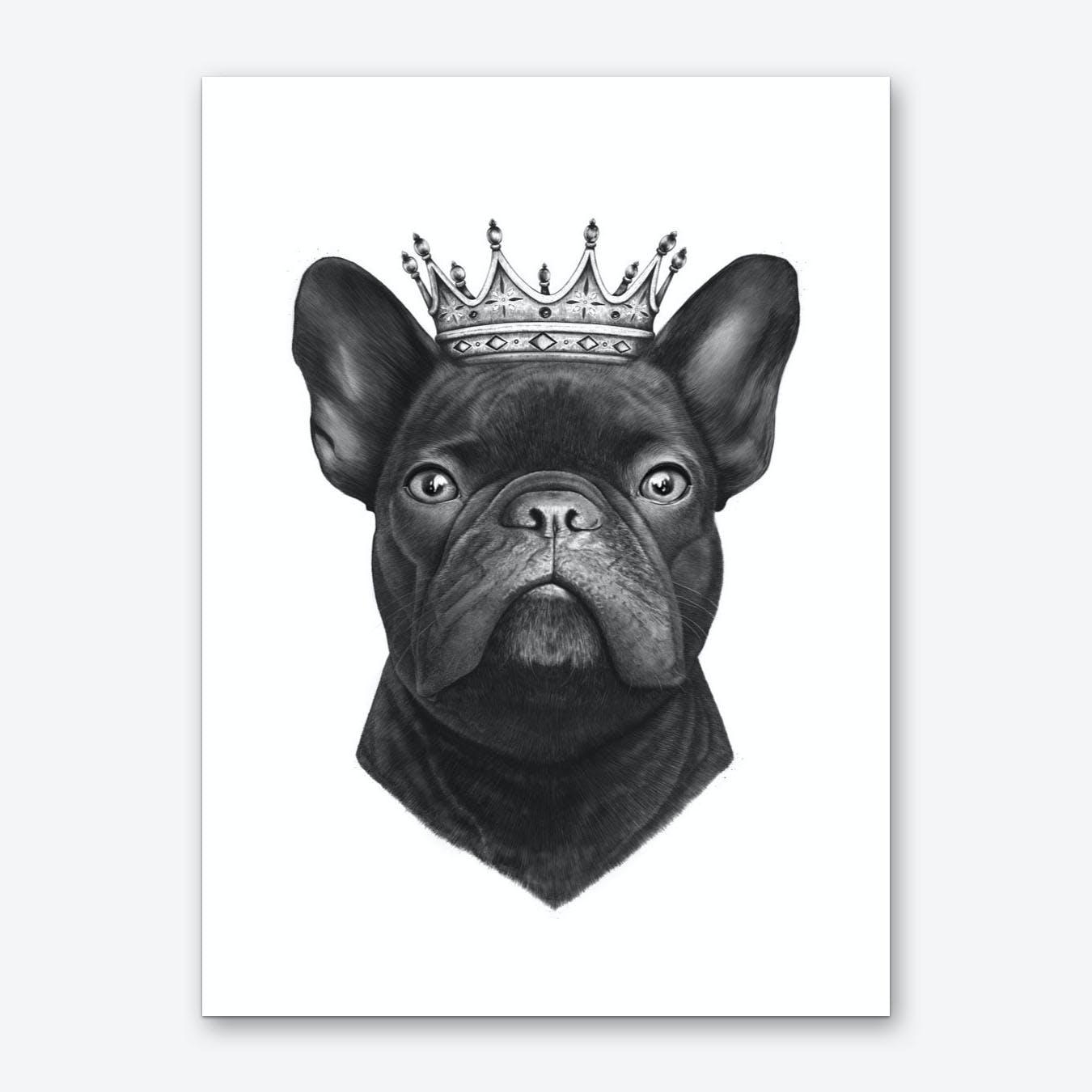 King French Bulldog Art Print