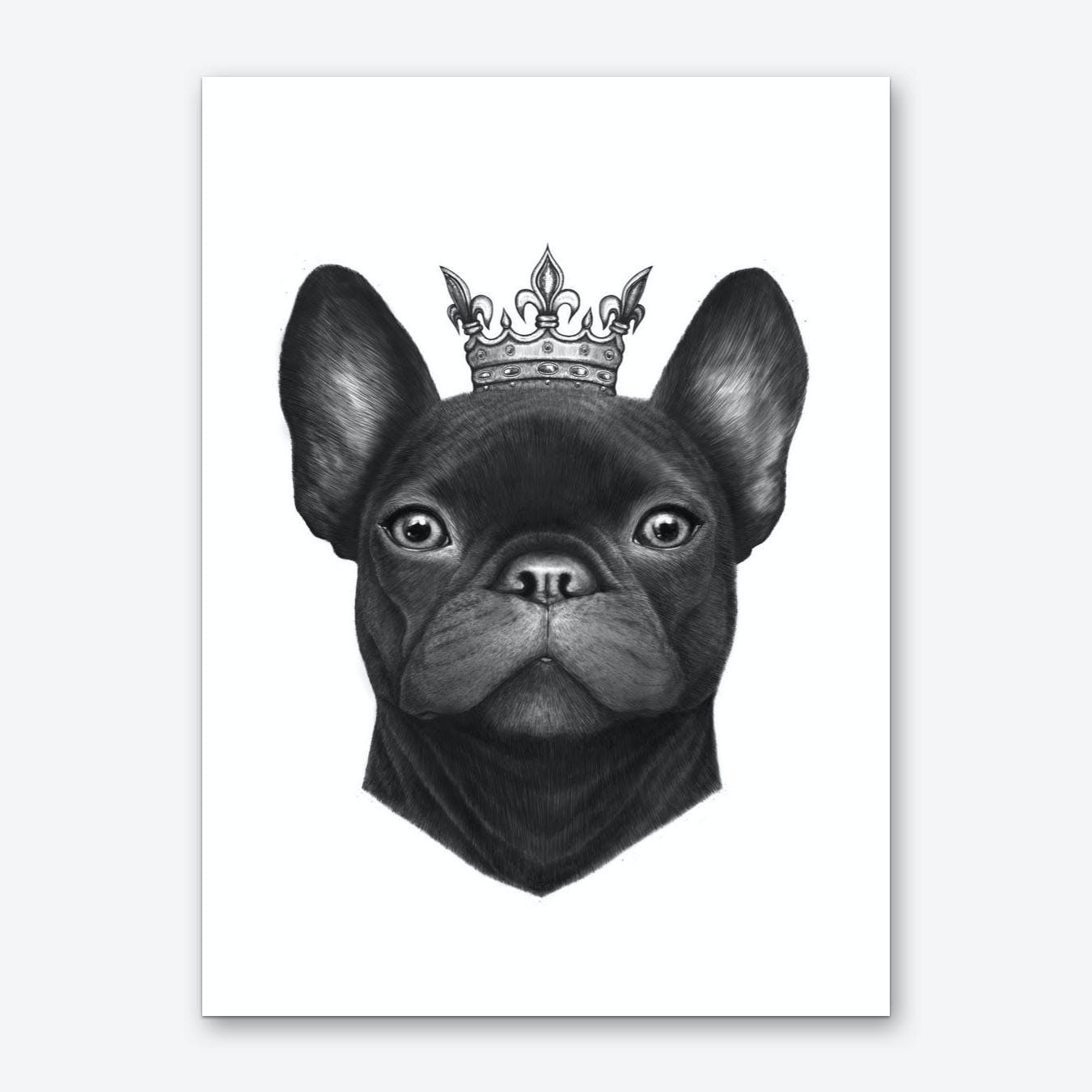 Queen French Bulldog Art Print