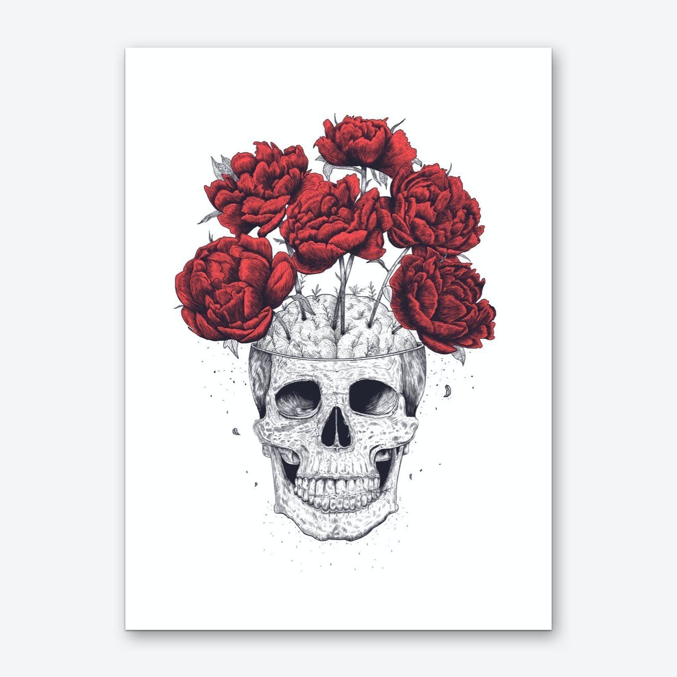 Skull With Red Peonies Art Print