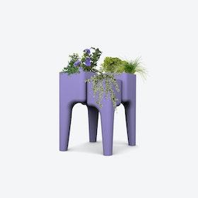 Kiga Kitchen Garden M Lavender