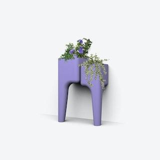 Kiga Kitchen Garden S Lavender