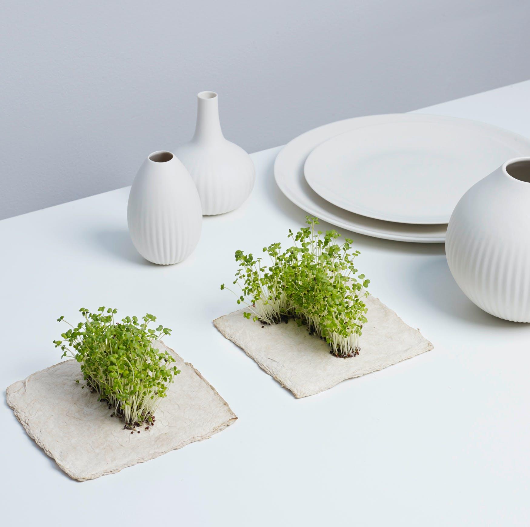 Plant Growing Paper (LIVE)