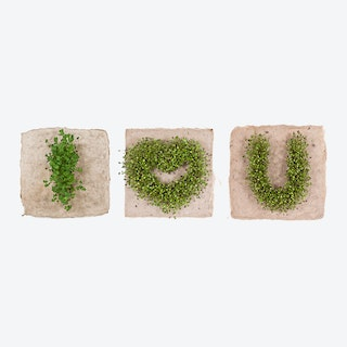 Plant Growing Paper (I <3 YOU)