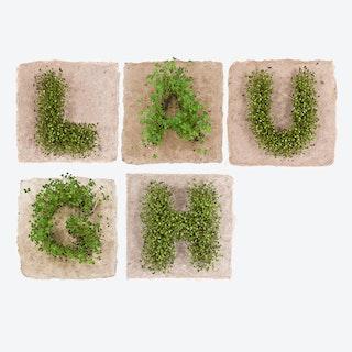 Plant Growing Paper (LAUGH)