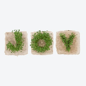 Plant Growing Paper (JOY)
