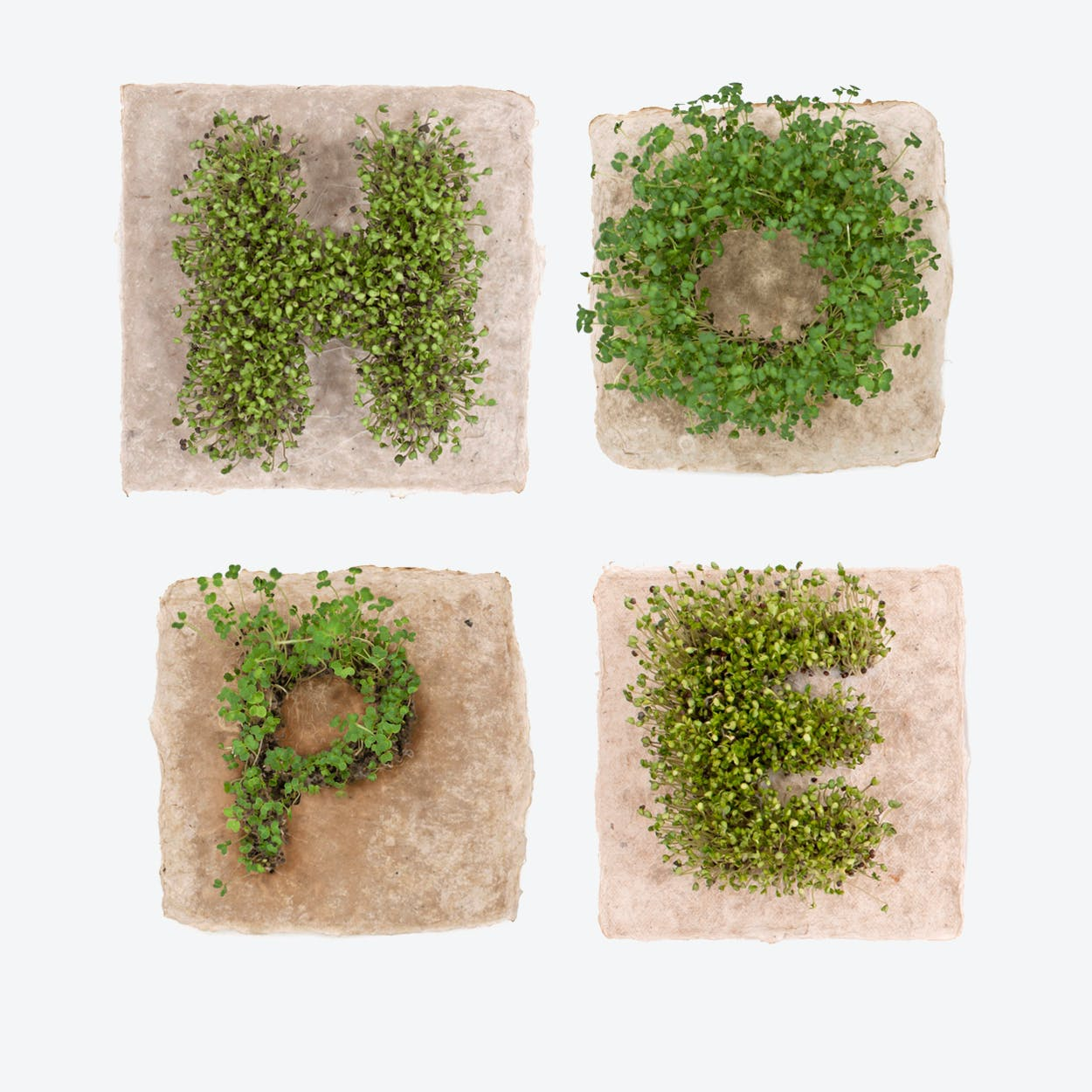 Plant Growing Paper (HOPE)