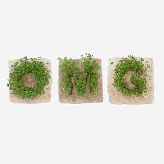 Plant Growing Paper (OMG)