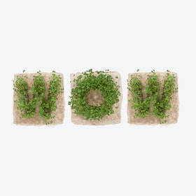 Plant Growing Paper (WOW)