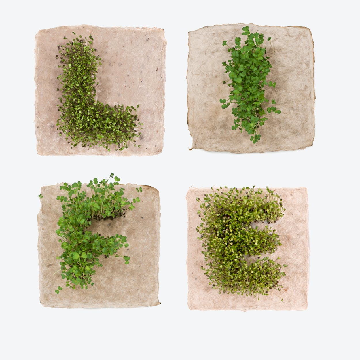 Plant Growing Paper (LIFE)