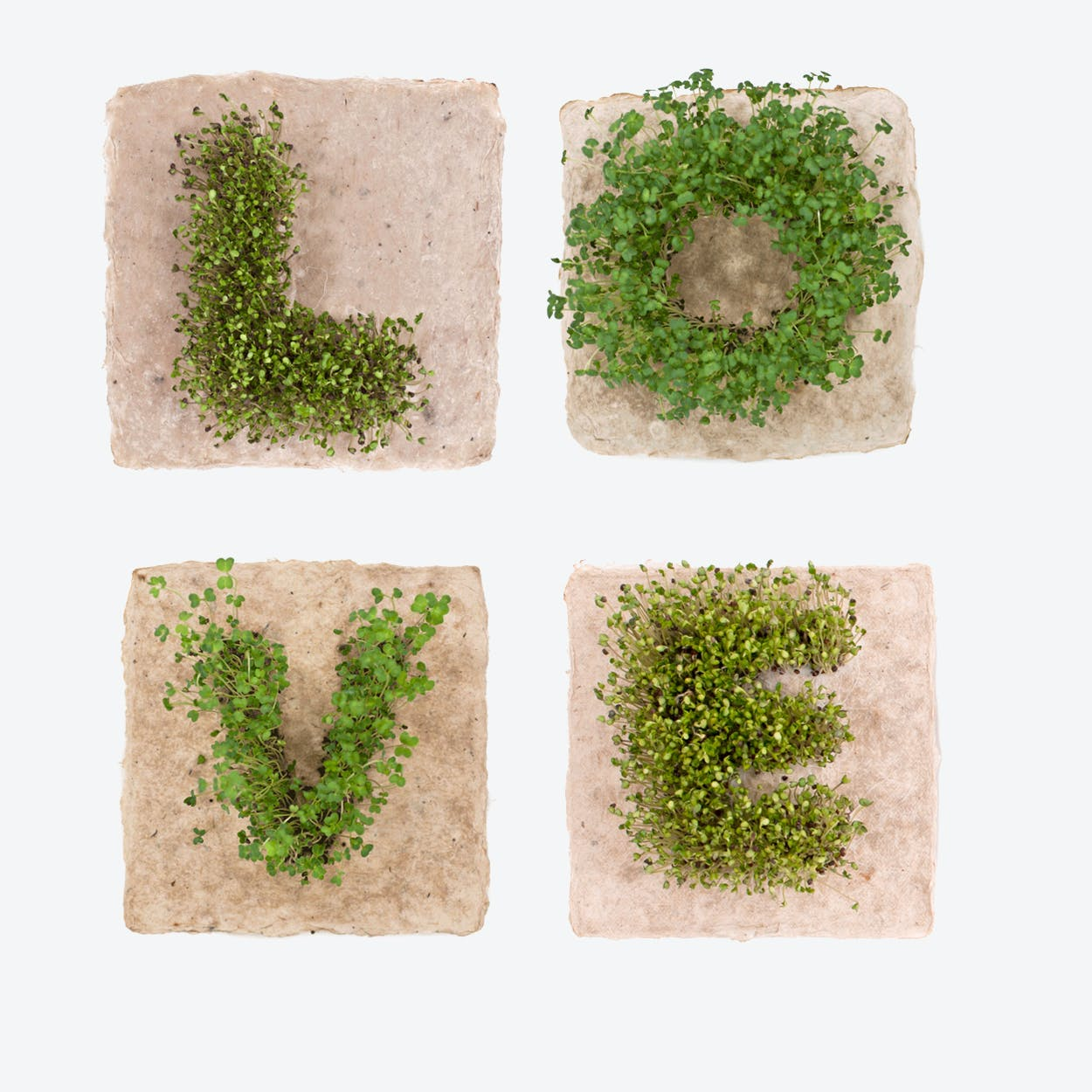 Plant Growing Paper (LOVE)