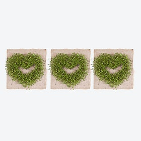 Plant Growing Paper (<3 <3 <3)