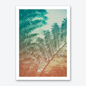 Ferns III Art Print