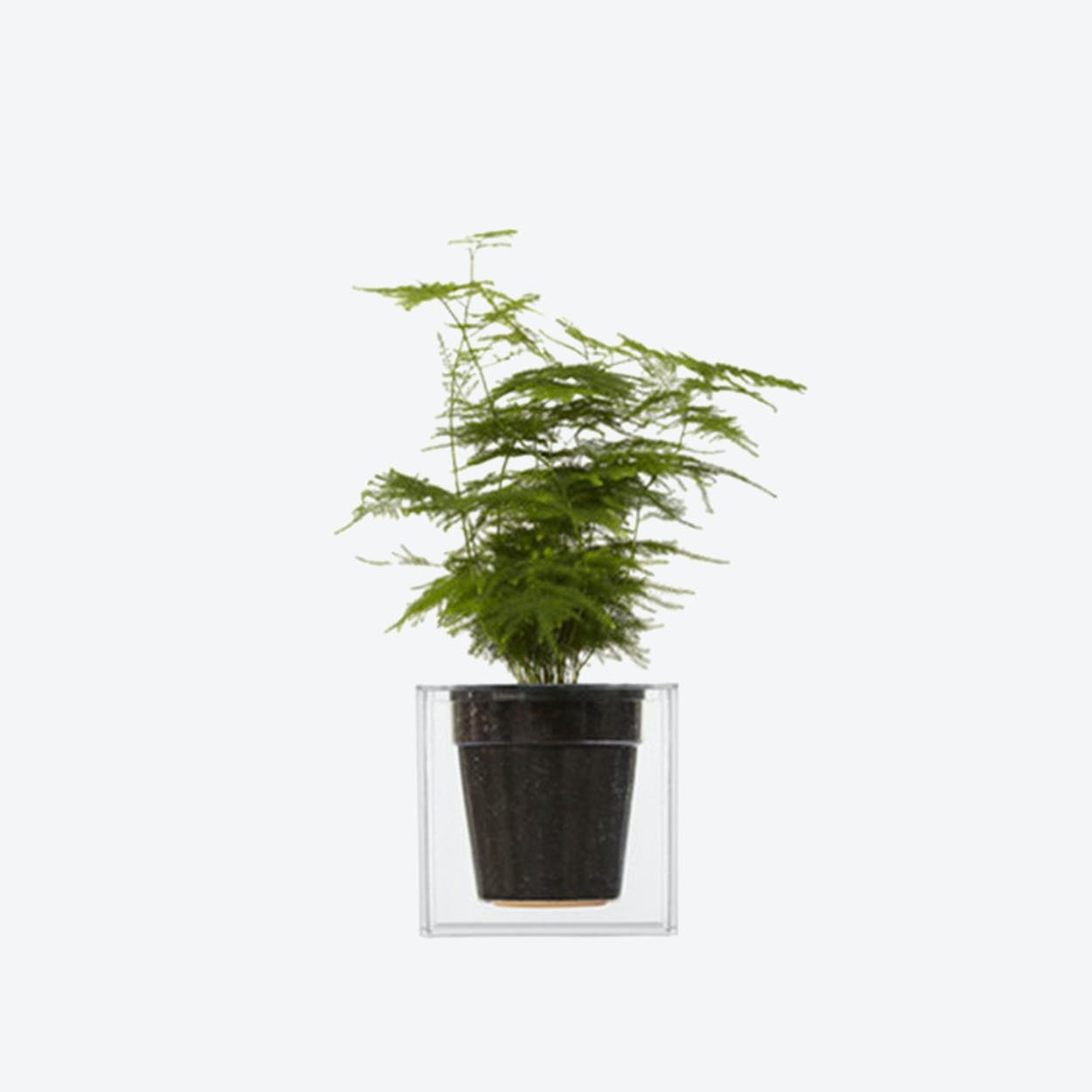 Cube Planter Small Transparent