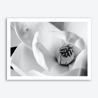 Magnolia 1 Art Print
