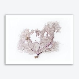 Coral Fan Art Print
