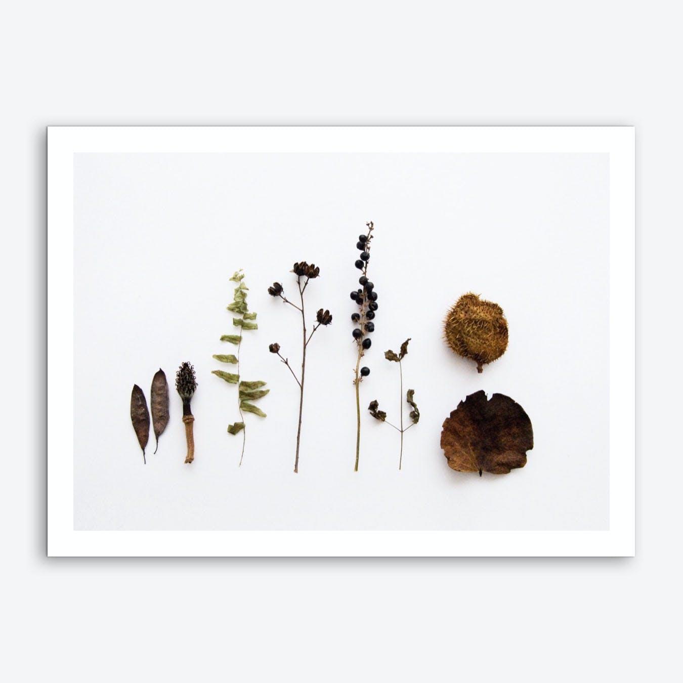 Flora Collection Art Print