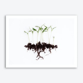 Pepper Sprouts Art Print
