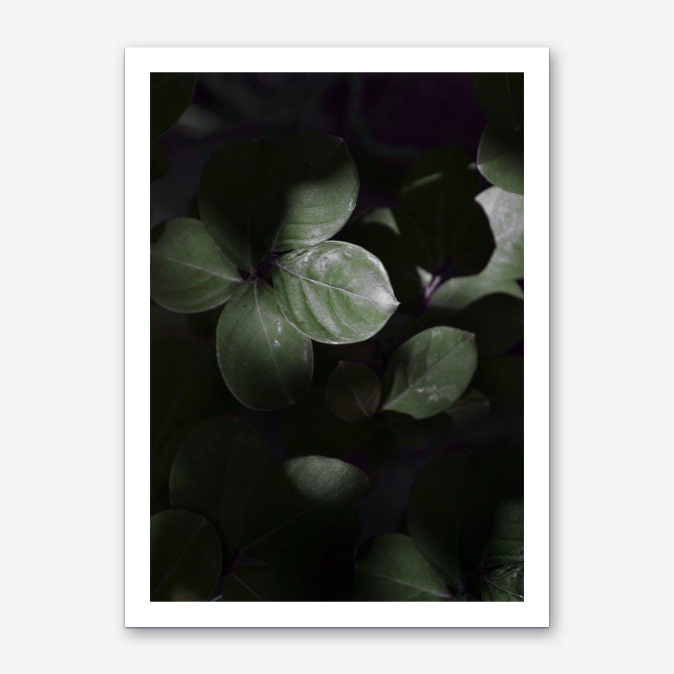 Gloomy Dark Leaves Art Print