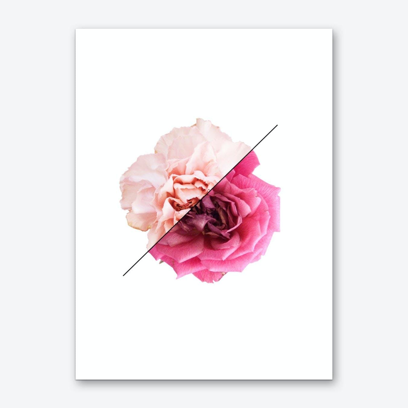Carnation & Rose Art Print
