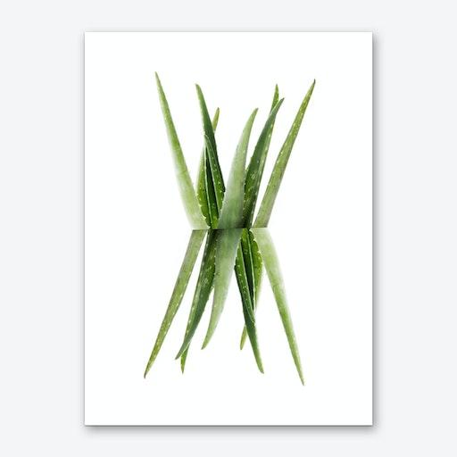 Aloe Art Print