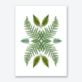 Flowing Ferns Art Print