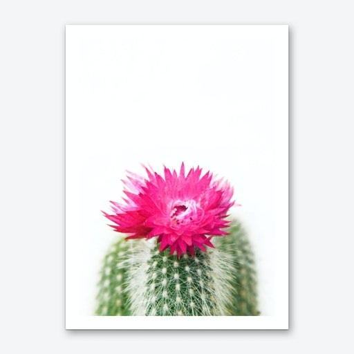Pink Flowering Cactus Art Print