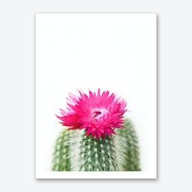Pink Flowering Cactus Art Print