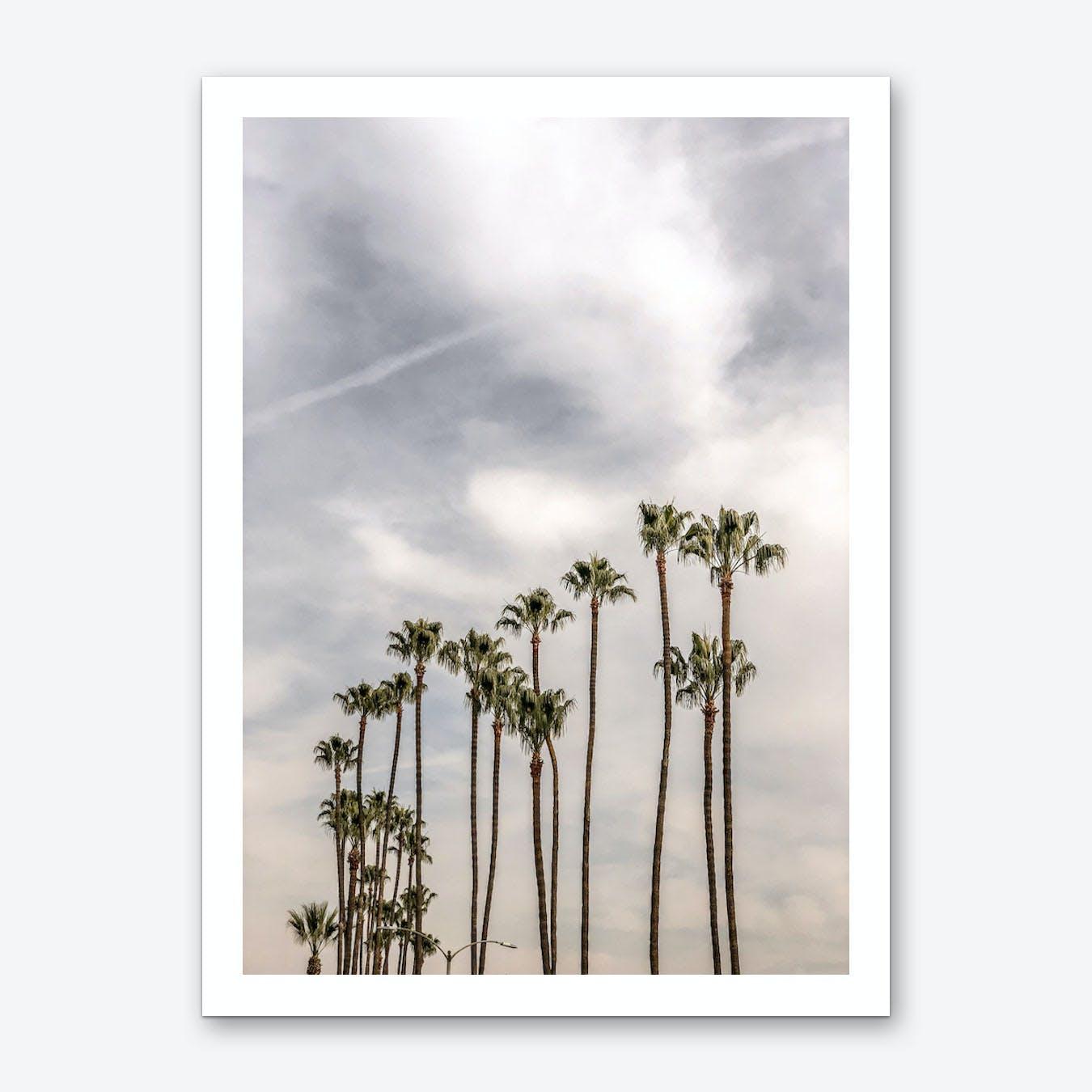 Palm Trees II Art Print