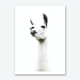 Llama I Art Print