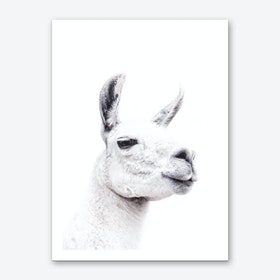 Llama II Art Print
