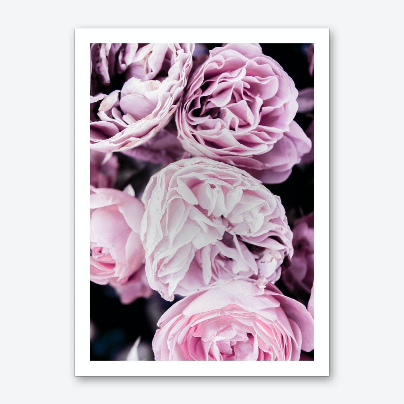 Pink Flowers II Art Print