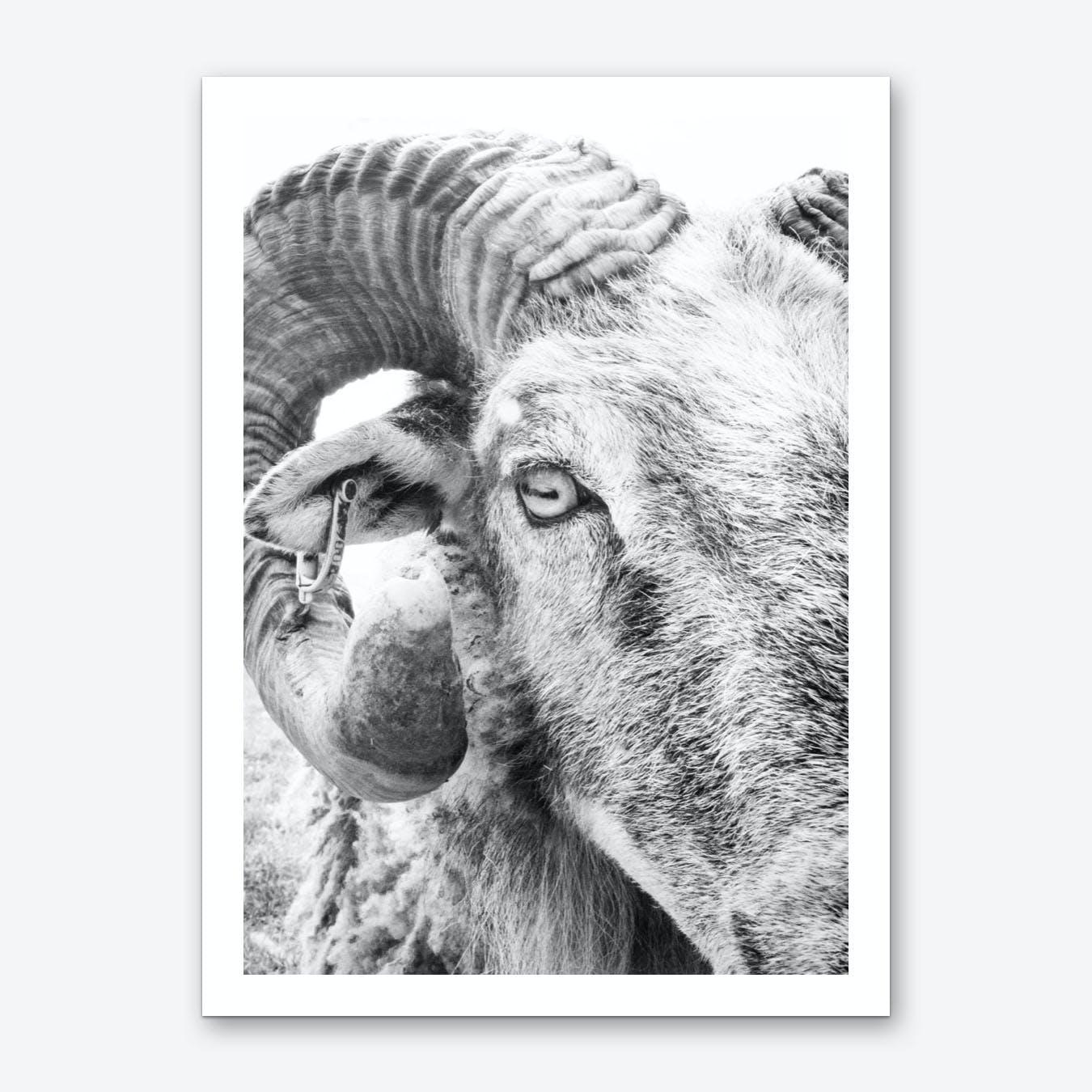 R.A.M. II Art Print