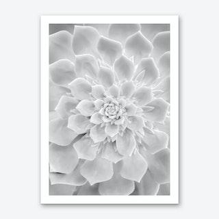 White Succulent Art Print