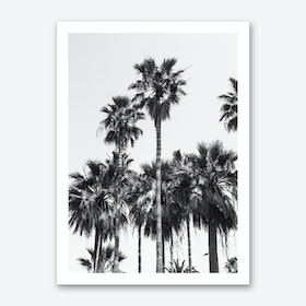 Sabal Palmetto  Art Print