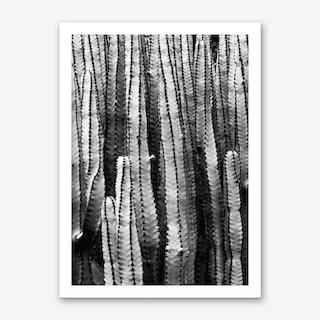 Cacti 1  Art Print