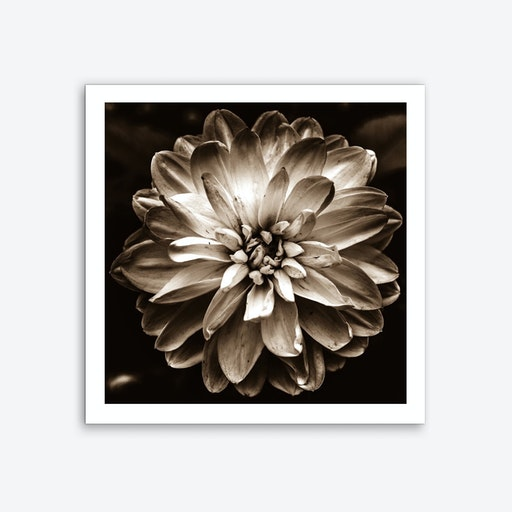 Flower of Life (Sepia) Art Print