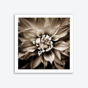 Flower III contrast Art Print